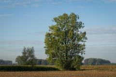 De herfst hangt mild in de lucht.