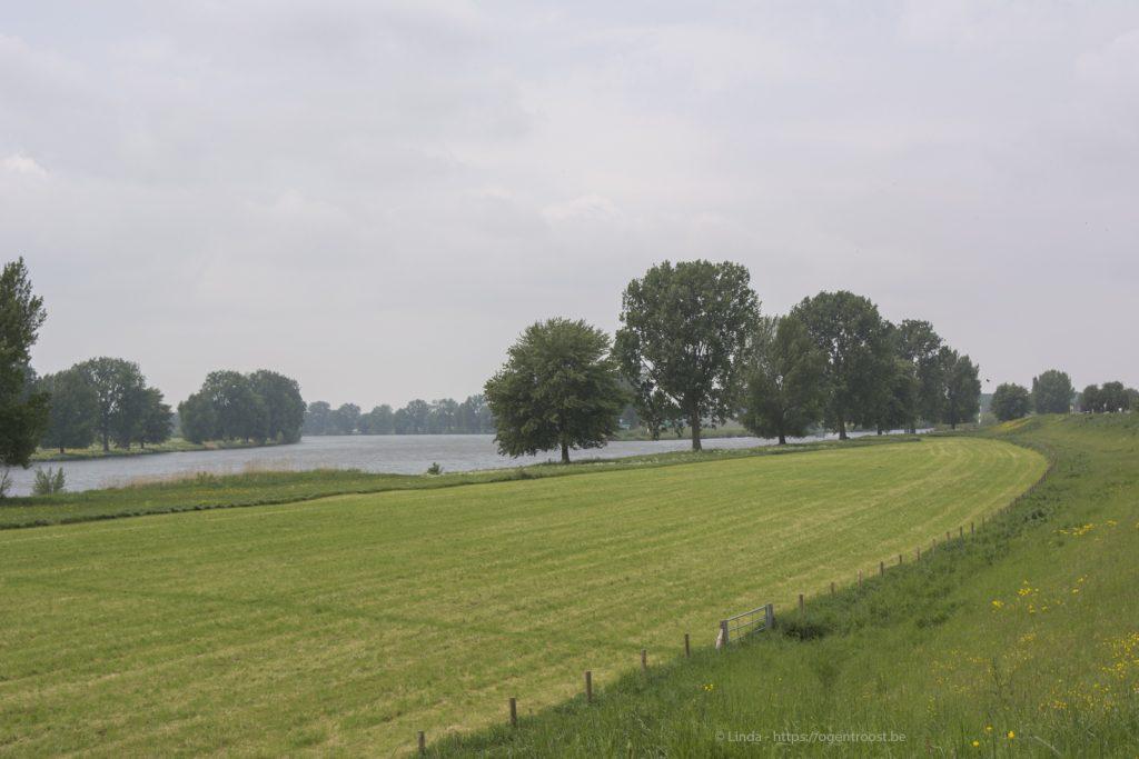 de Maas