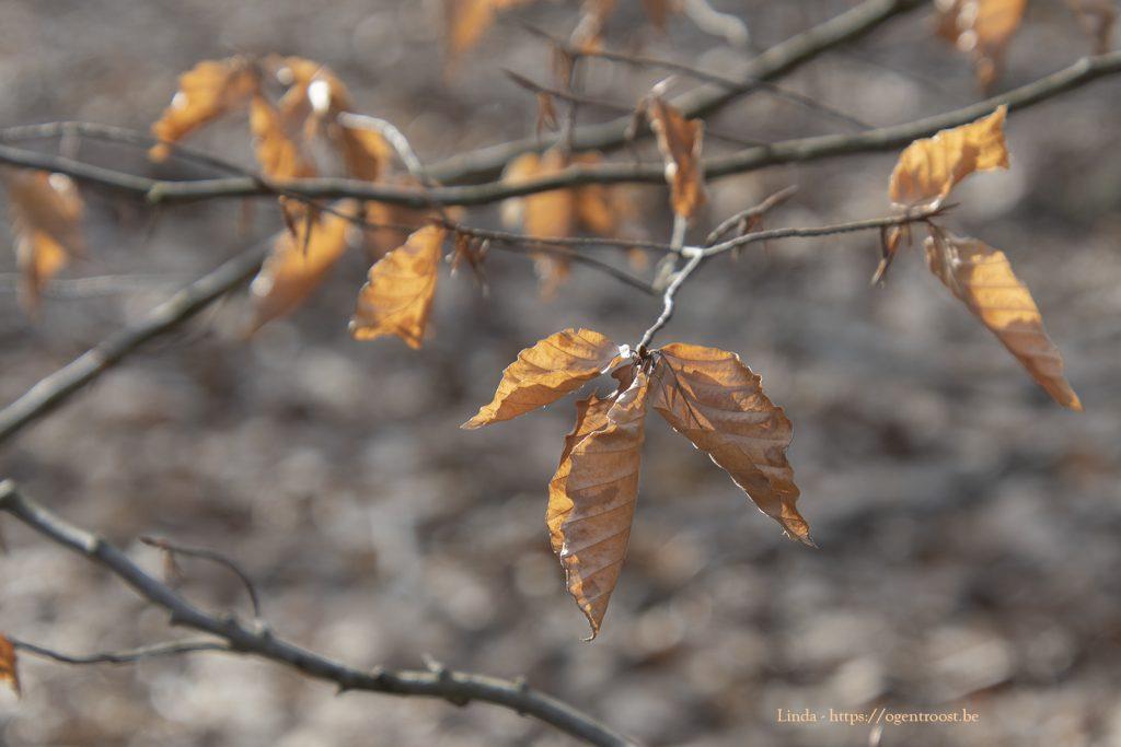 Hier en daar hangt er ook nog wat herfst.