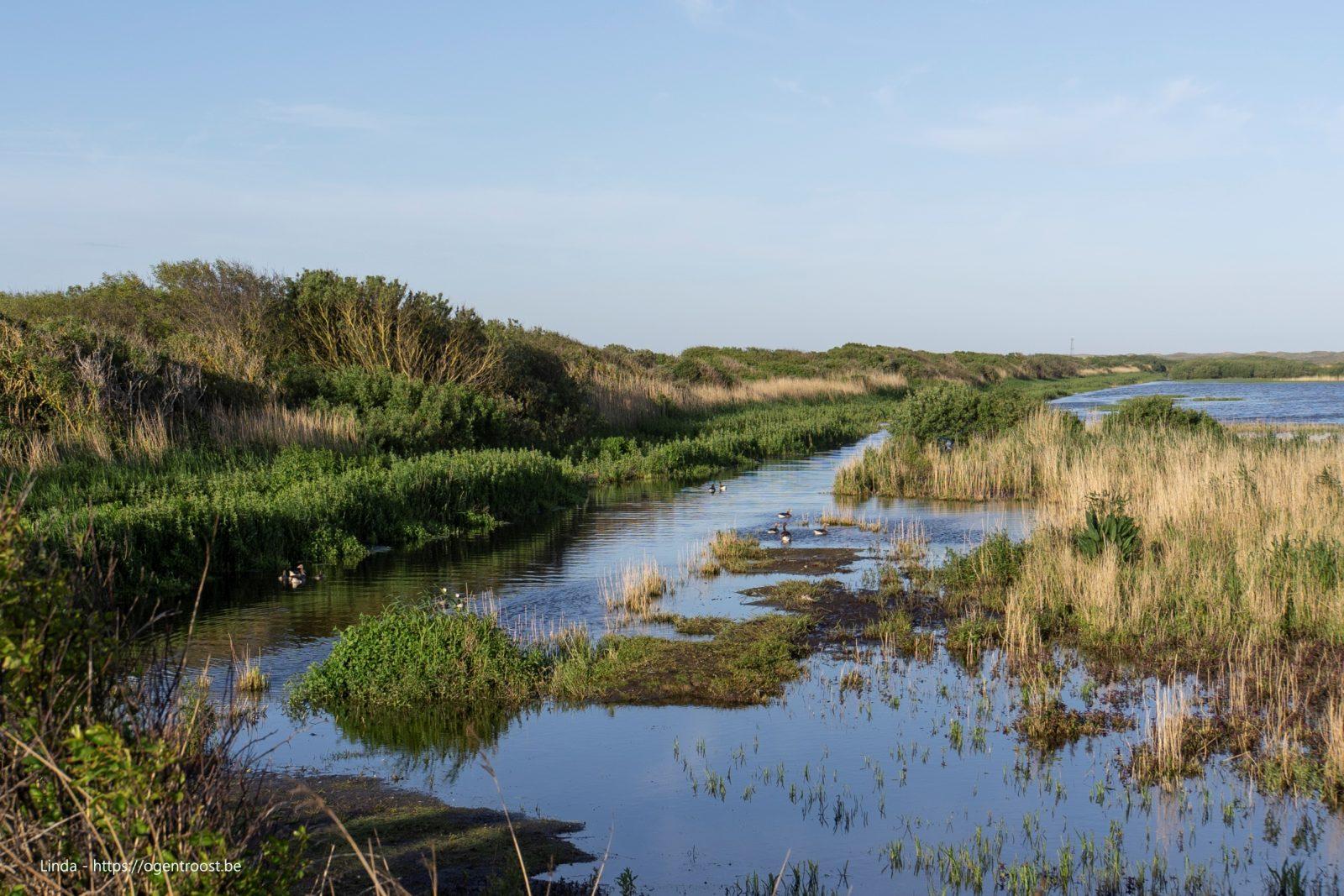 Kroon's polder