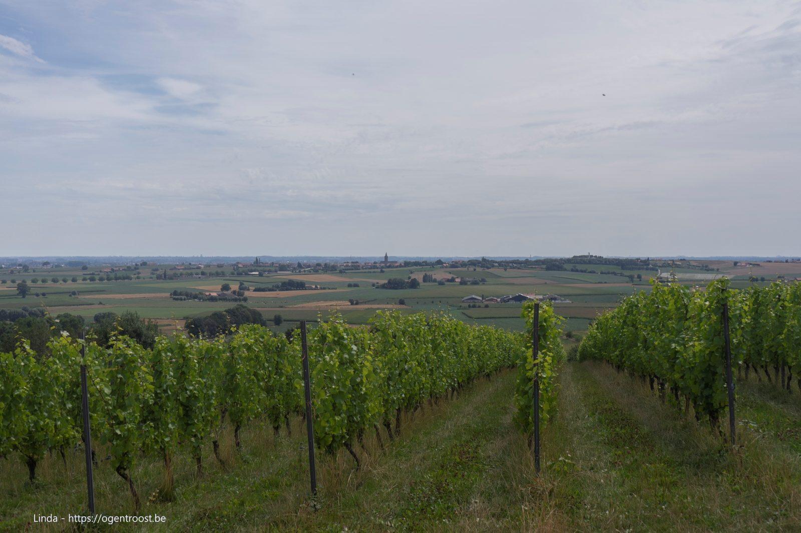 Wijngaard Monteberg