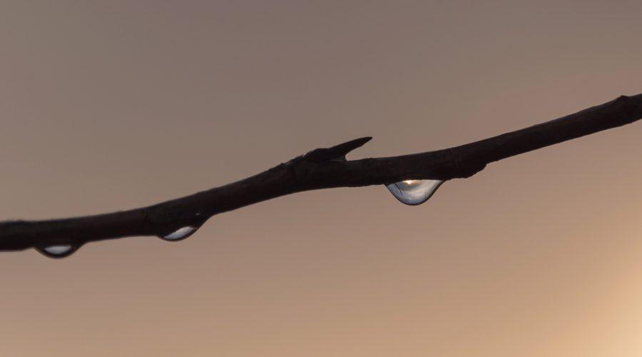 Zon in regendruppel